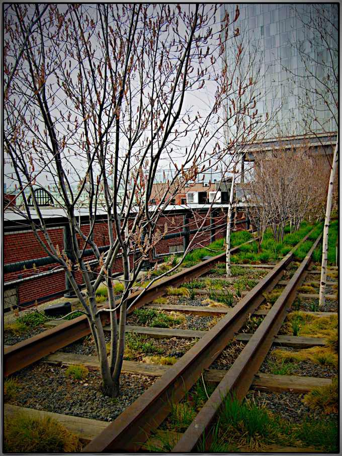 highline-trees